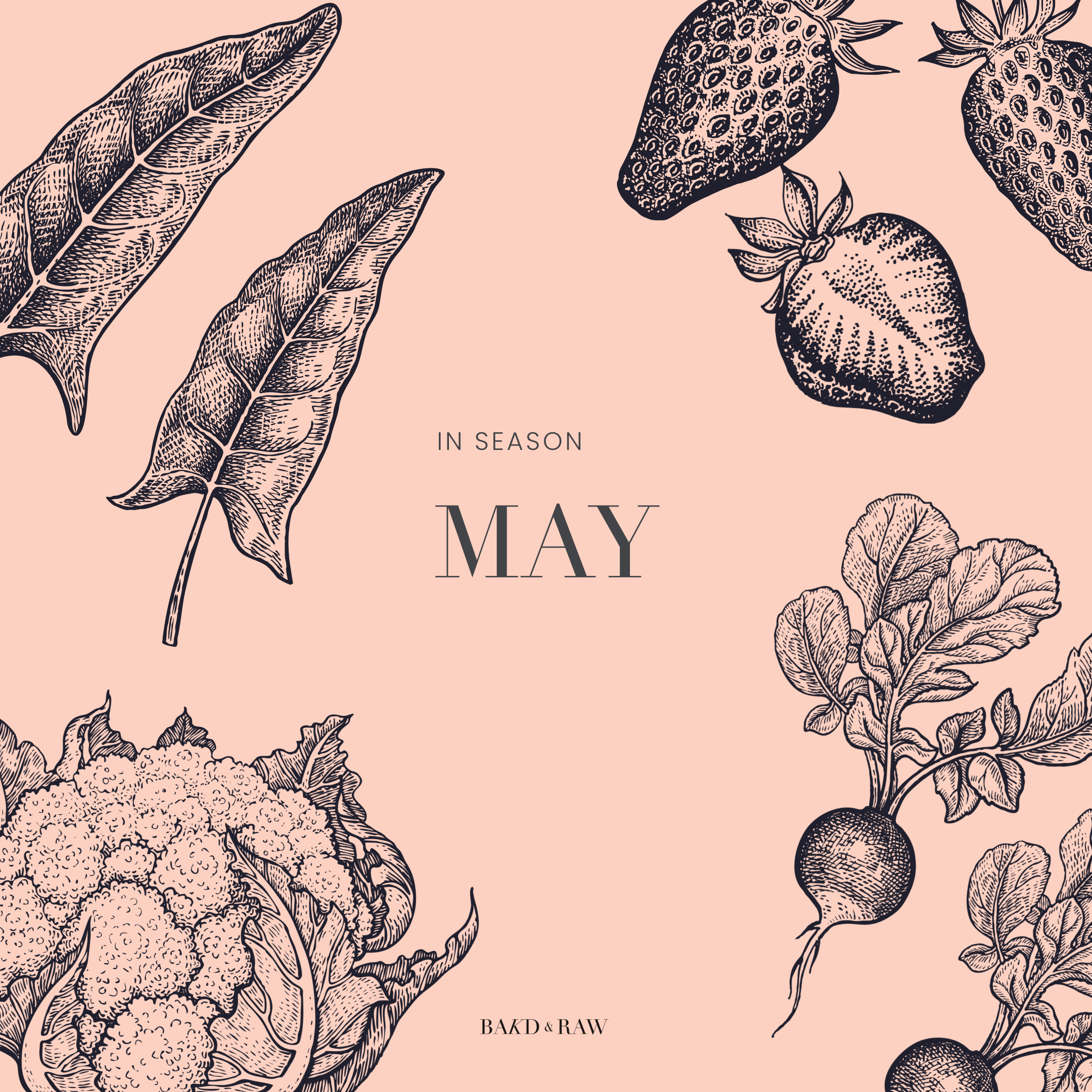 Overview in Season in May in Germany, Saisonkalender by Bakd&Raw