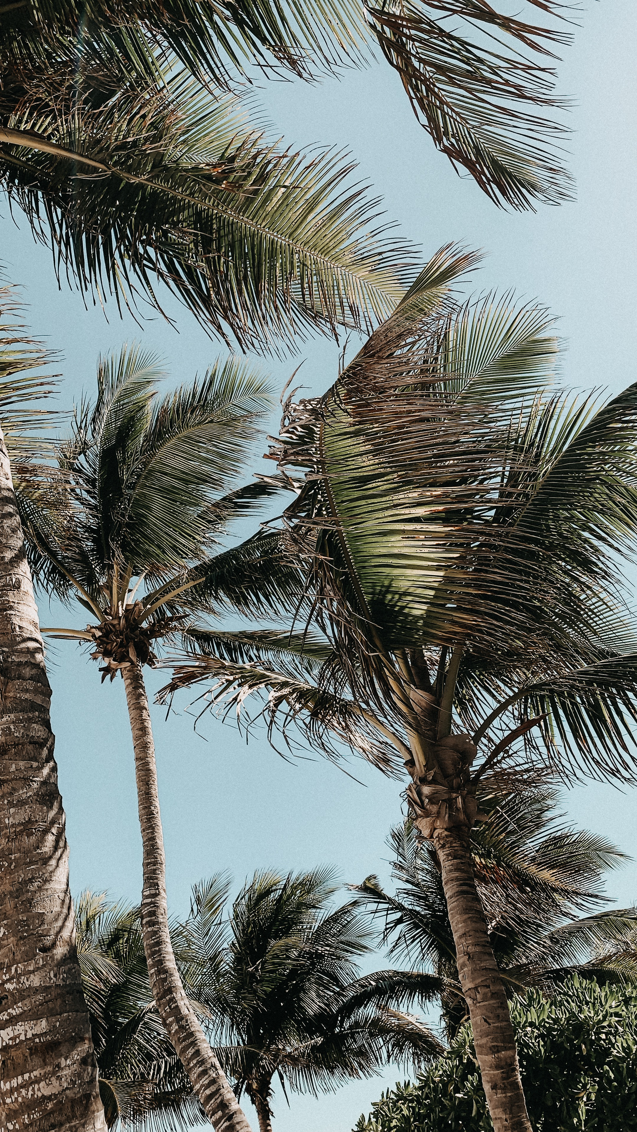 Palm trees in Mexico; shot by Karolin Baitinger