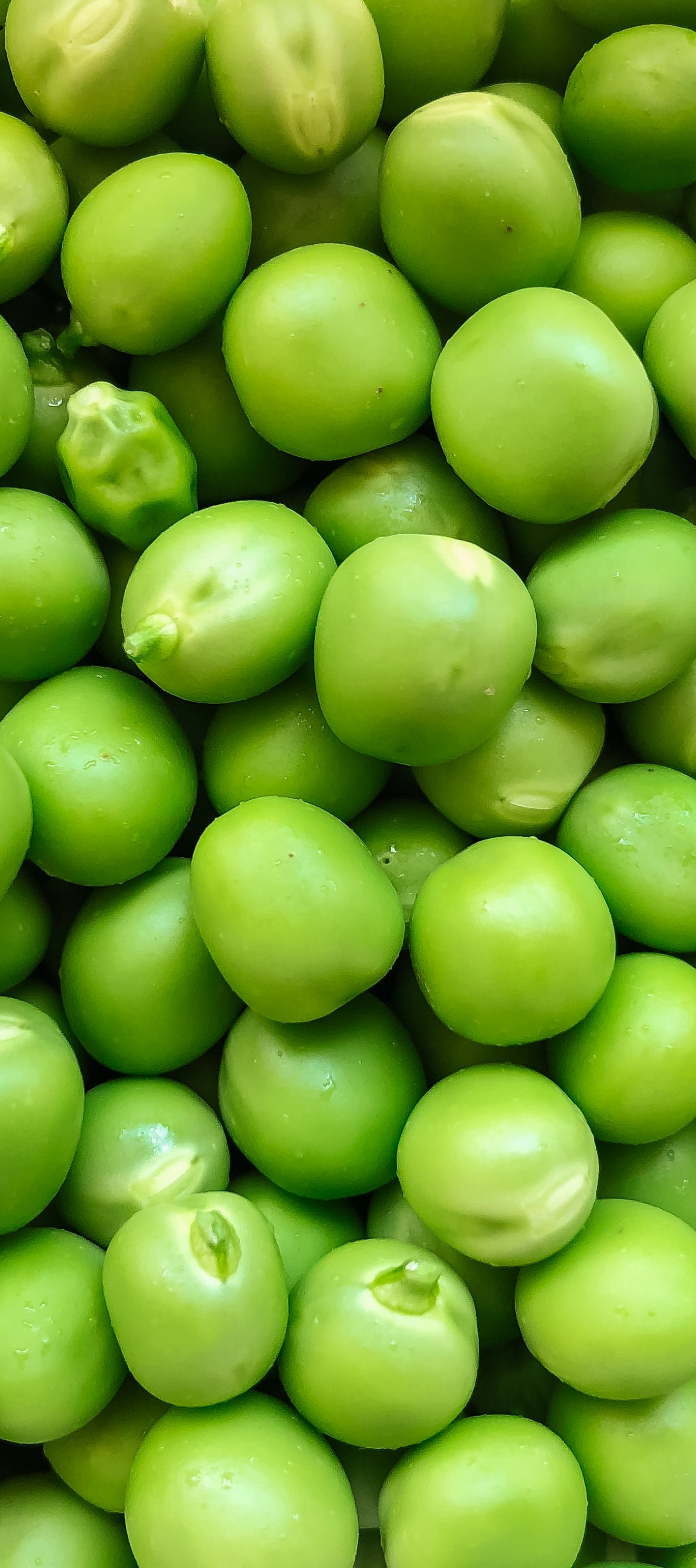 Peas by bakd&raw plant guide